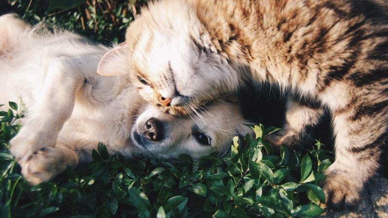 mascotas mas comunes
