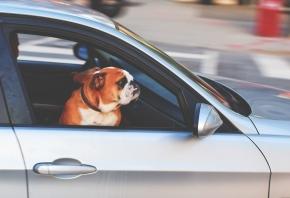 Normas para el transporte de mascotas en España