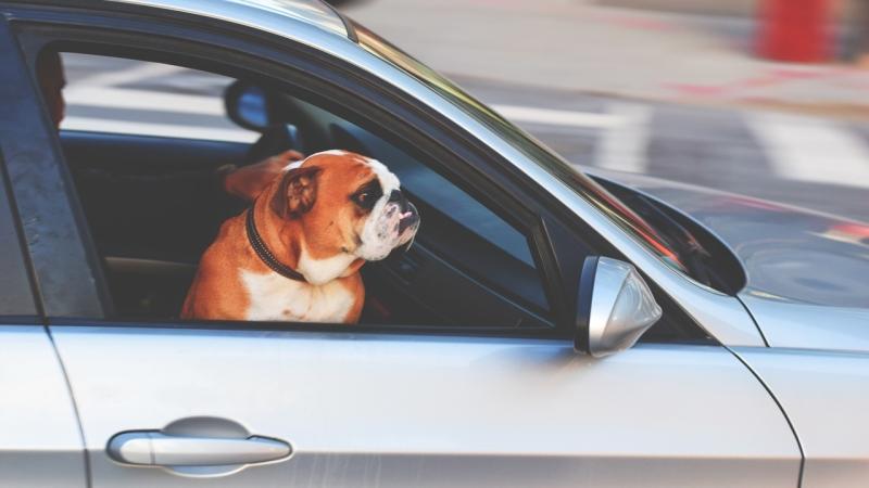 transporte de mascotas españa