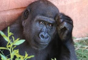 Lista de animales en peligro de extinción en la actualidad