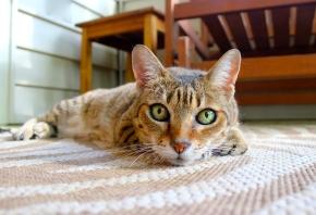 El lenguaje de los gatos: cómo saber si mi gato me quiere