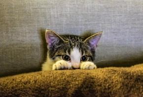 Cómo cortarle las uñas a un gato con unos sencillos trucos