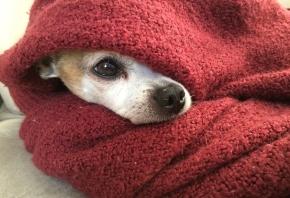 Cómo cuidar a los perros del frío en invierno