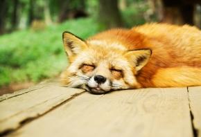 Con qué sueñan los animales cuando están dormidos