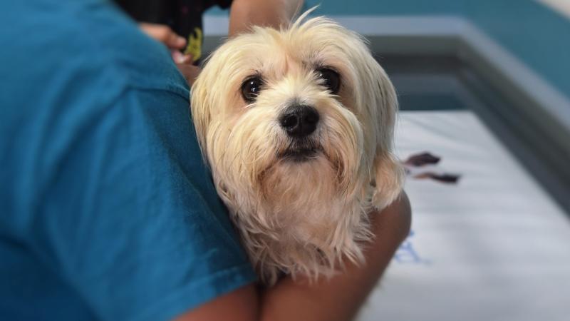 mejorar clinica veterinaria