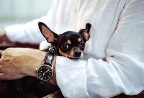 La importancia de la atención al cliente en un veterinario