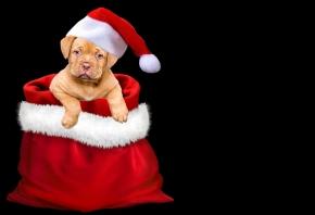 Cómo cuidar a tu mascota durante la Navidad