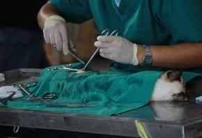¿Cuáles son las salidas profesionales en veterinaria?