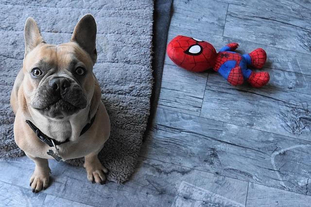 Tratamiento para alergia en perros