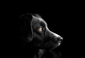 Cómo trabaja una clínica veterinaria de oftalmología para animales