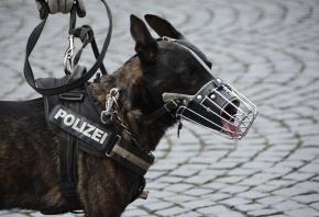 Qué perros tienen que llevar bozal y cómo acostumbrarlos