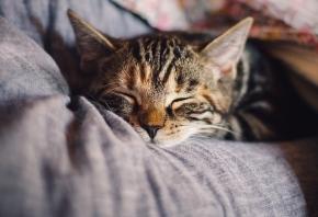 Pasos para adoptar una mascota desde el principio del proceso