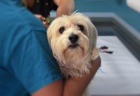 Cómo montar una consulta veterinaria paso a paso