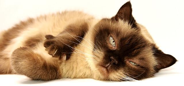cat-3113513_640