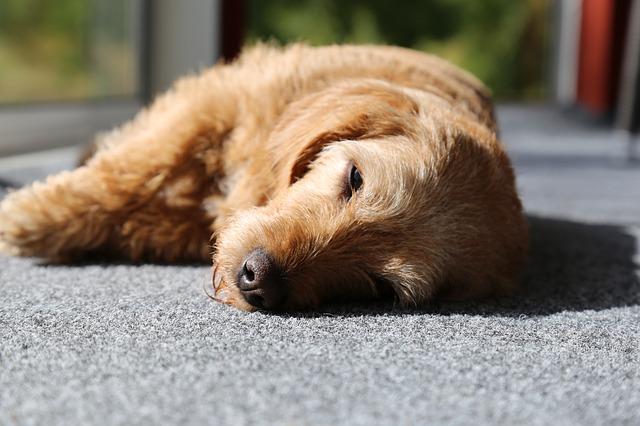 dog-2655211_640