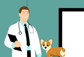 En qué consiste la fisioterapia canina y cómo trabajan sus clínicas