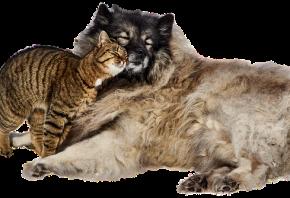 Perros y gatos: convivencia entre ellos y consejos fundamentales