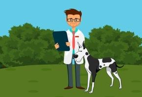 Dermatología veterinaria: cómo funcionan sus clínicas y qué necesitan