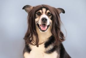 Cómo montar una peluquería canina en tu clínica veterinaria