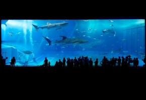 Cómo organizar un acuario para principiantes
