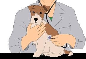 ¿Cuál es el precio de consulta de veterinario que debo requerir?
