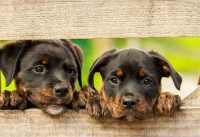 La importancia de la implantación de microchip en perros