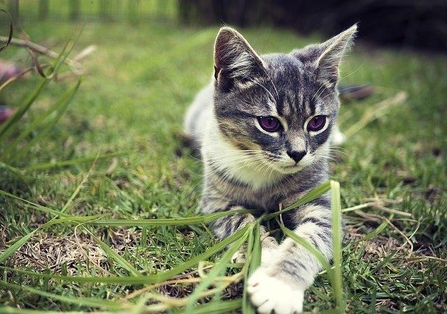 kitten-1169507_640