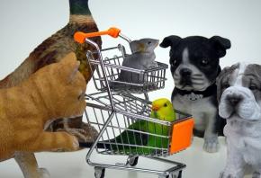 Montar una tienda de animales: ¿es rentable este negocio?