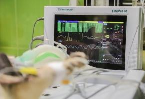 Máquina de anestesia veterinaria: qué es y componentes esenciales